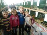 Výstava drobného zvířectva